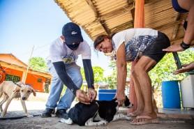 ANTIRRÁBICA - Prefeitura dá início à imunização de cães e gatos na zona rural de Boa Vista